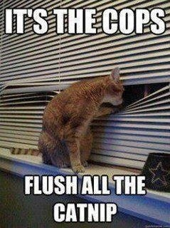 Facebook Funny: These cats need to hide their stash, and quick!