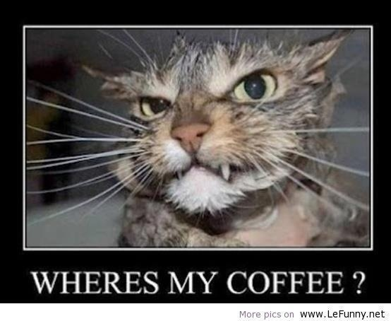 I really know that feeling: Check out this cat that is asking: Where's My Coffee? Want more Facebook #funny pictures? http://thespringmount6pack