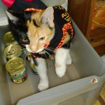 A Pumpkin and a Devil Sit Down to Eat… Cat Food