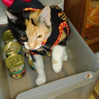 My kitties love their Sheba Cat Food #Shop #ShebaCat