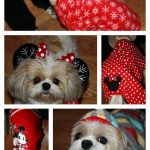 Keeping Dogs Happy and Warm for the Holidays