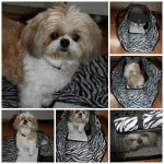 Sherpa Park Tote- Taking Your Pet Along just got Easier