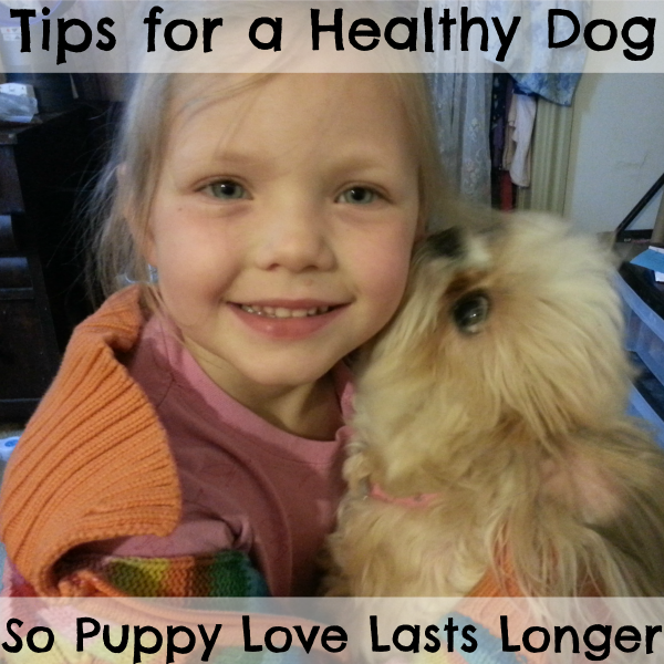 Tips for a healthy Dog