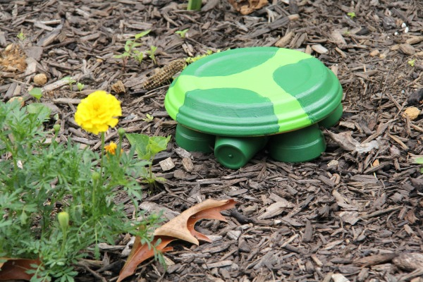 My turtle is hanging out make a terra cotta turtle, making a decoration for the garden