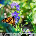 Quick and Easy Guide to a Beautiful Butterfly Garden