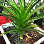 Best House Plants for Travelers