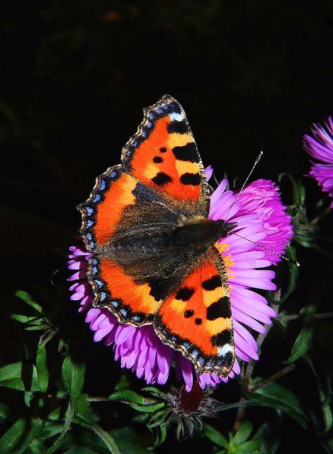Your Quick and Easy Guide to a Beautiful Butterfly Garden (1)
