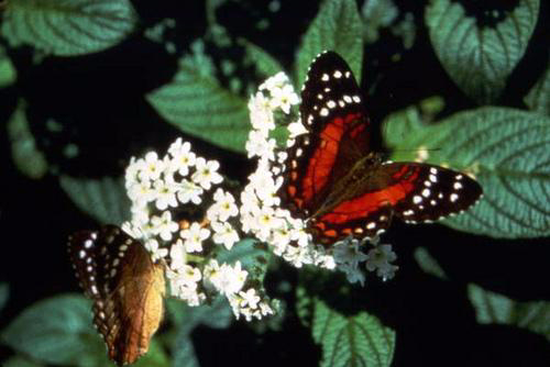 Your Quick and Easy Guide to a Beautiful Butterfly Garden (3)