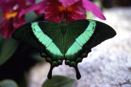 Your Quick and Easy Guide to a Beautiful Butterfly Garden (4)
