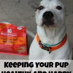 Keeping Your Pup Healthy and Happy #StellaandChewys