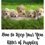 How to Keep Your New Litter of Puppies Under Control