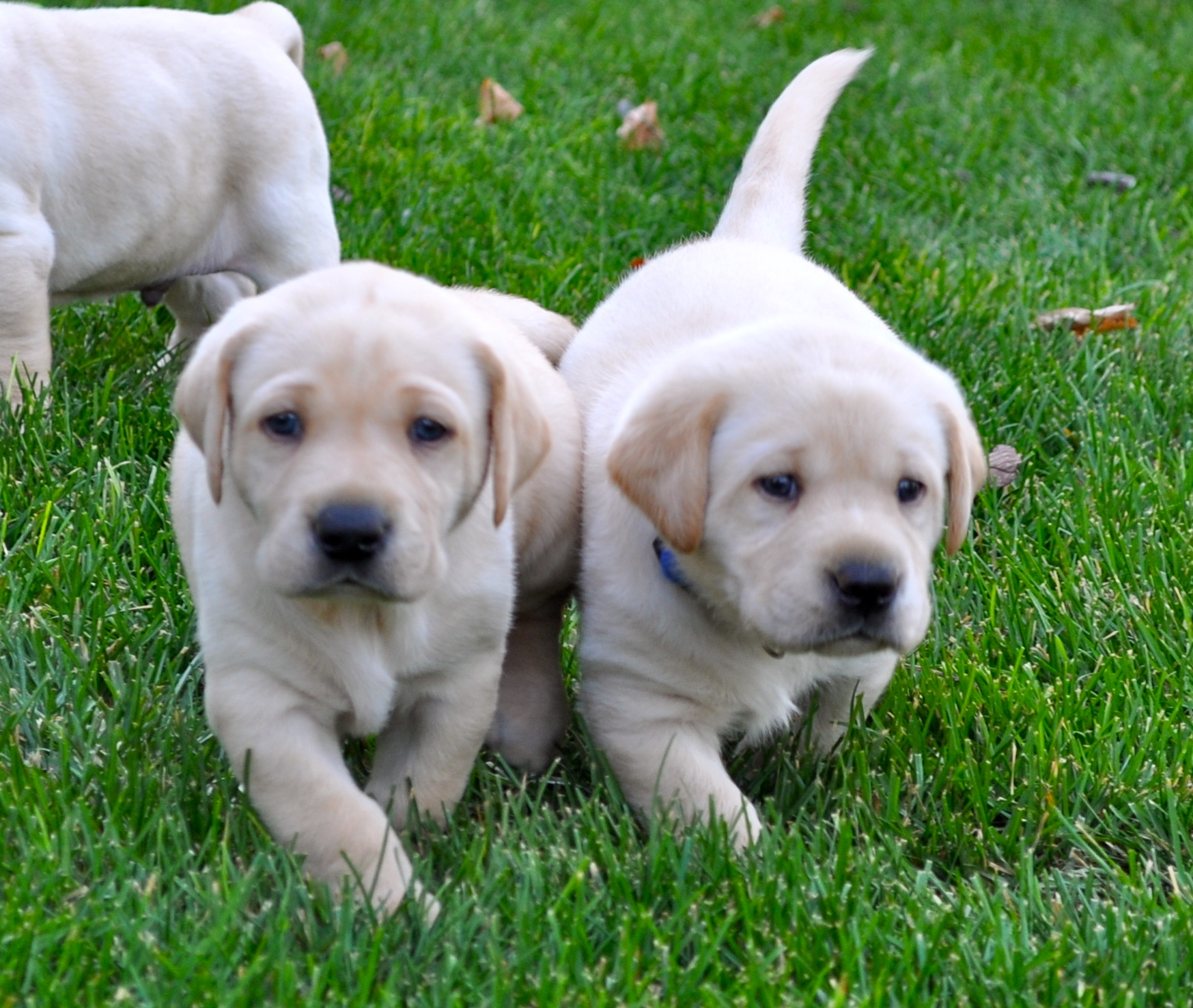 How to Keep Your New Litter of Puppies Under Control (3)