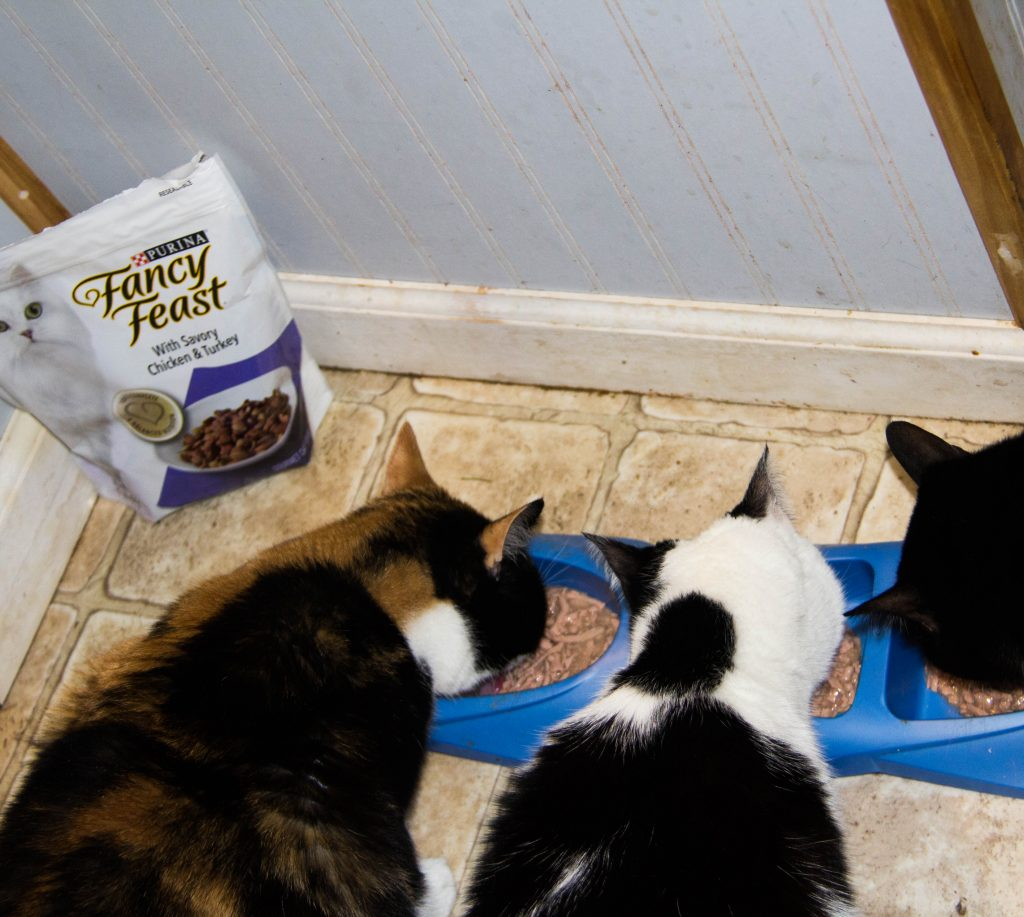 cat-lover-unite-at-giant-with-friskies-fancy-feast-and-tidy-cat-11
