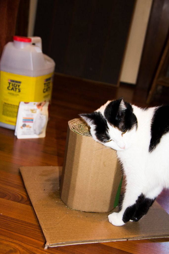 cat-lover-unite-at-giant-with-friskies-fancy-feast-and-tidy-cat-15