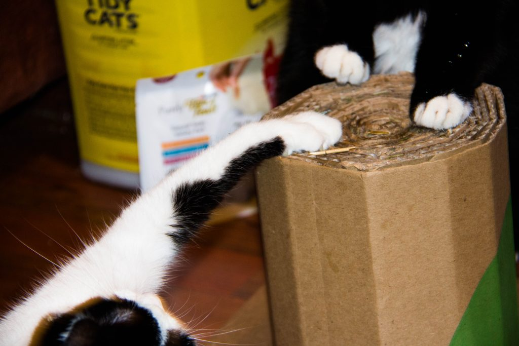 cat-lover-unite-at-giant-with-friskies-fancy-feast-and-tidy-cat-19