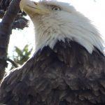 Visiting Blackwater National Wildlife Refuge