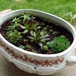 Creating a Special Planter for Your Plants