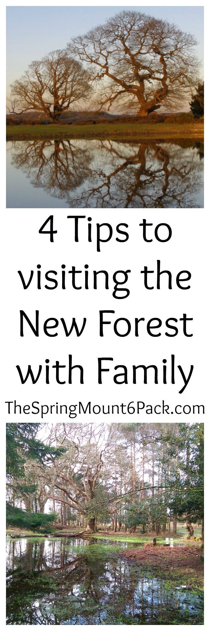 4 Tips to visiting the New Forest with Family. New Forest is located at Southern England and is a popular tourist destination.