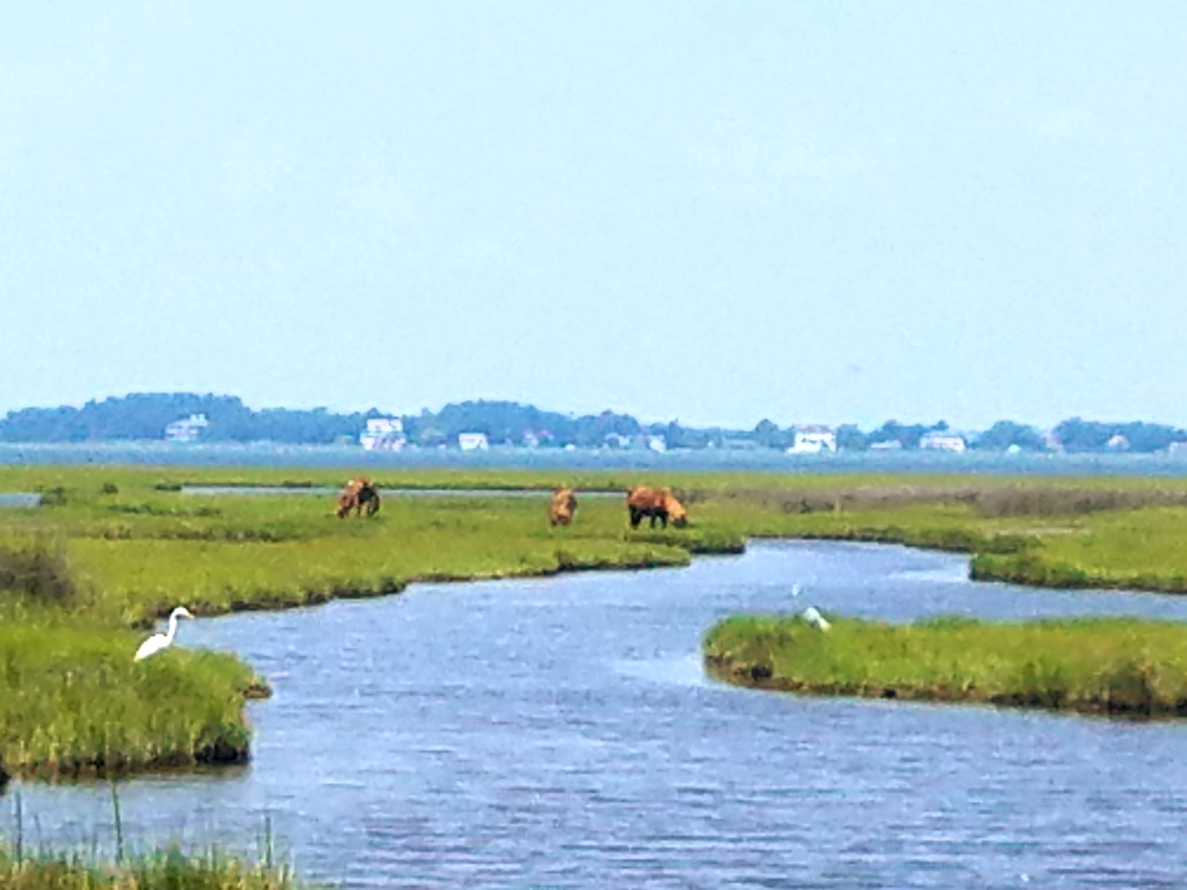 Assateague Island is known for the wild horses that roam the island. There is also enjoy swimming, camping, kayaking, paddle board, or wind surfing and more