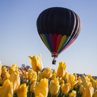Looking for something to do in Temecula? Take a balloon tour in Temecula. This is a lovely way to see the countryside. See what balloon tour is perfect for your trip.