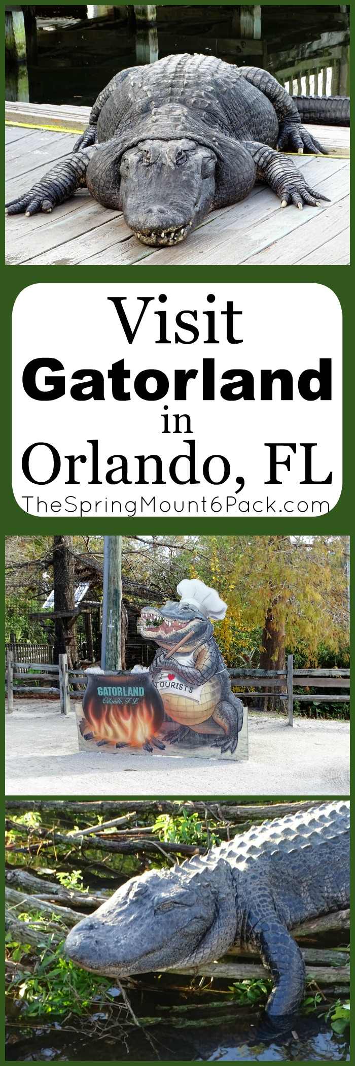 Visiting Orlando Florida and want something to do besides Disney? Gatorland is an alligator paradise. With 110 acres, this animal refuge is a fun packed day.