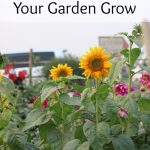 Making Time to Help Your Garden Grow