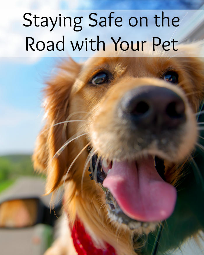 Staying Safe on the Road with Your Pet