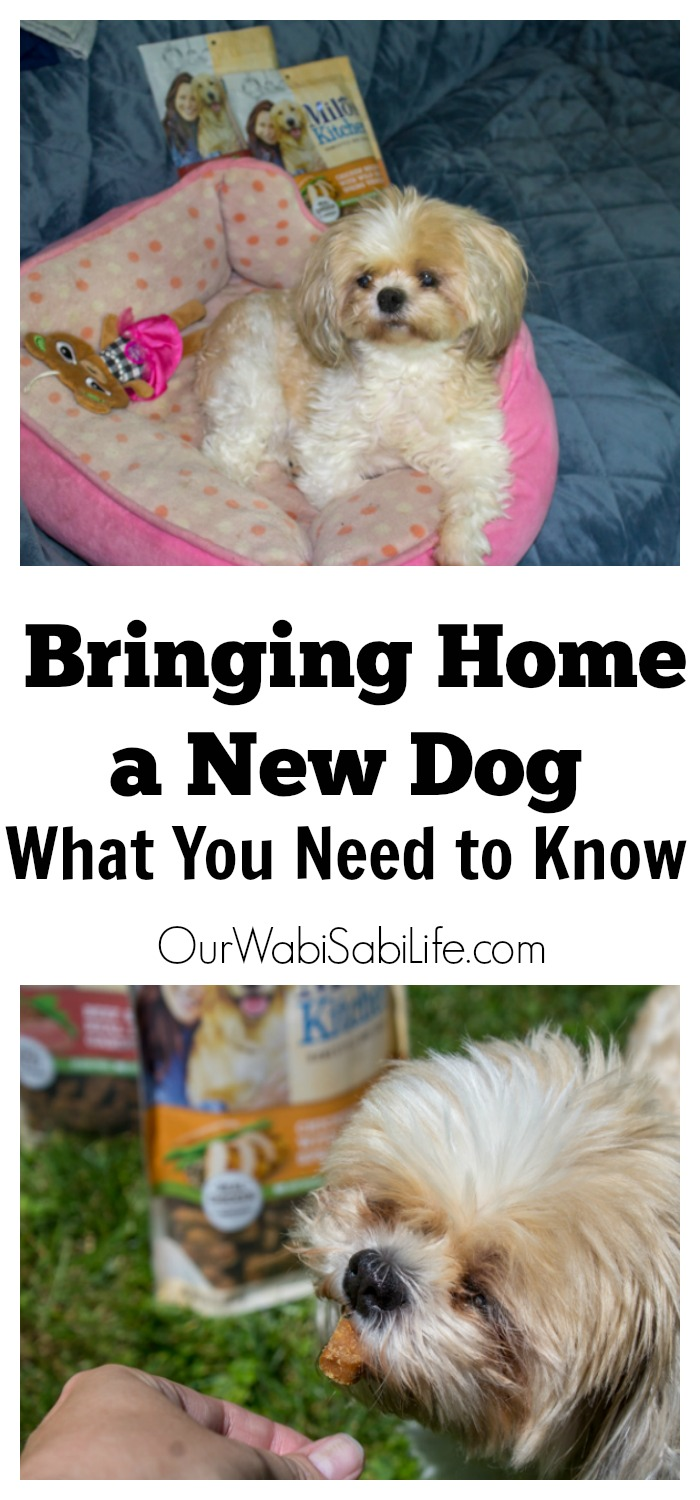 You are ready to add a fur baby to your life. Dogs make a great addition to a family. There are a few things that you need to know before adding a dog to your family.
