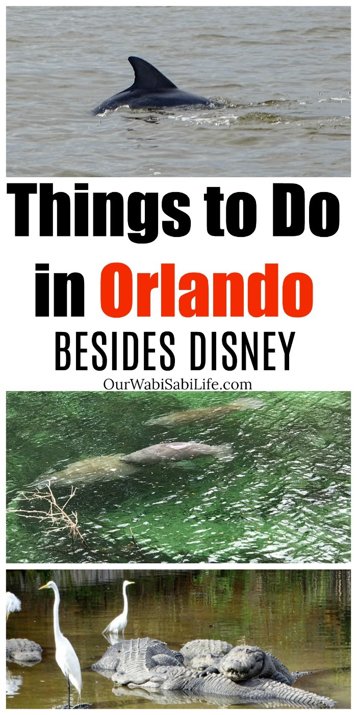 Heading to Orlando? Want things to do that isn't Disney? Orlando has a lot to offer. There is something for everyone. Things to Do in Orlando. #travel #Orlando #NotDisney #travelblogger
